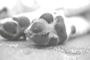 Soñar con Perros que muerden